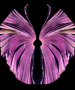 pink-butterfly_72