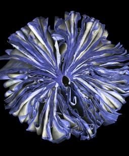 Lilac_72